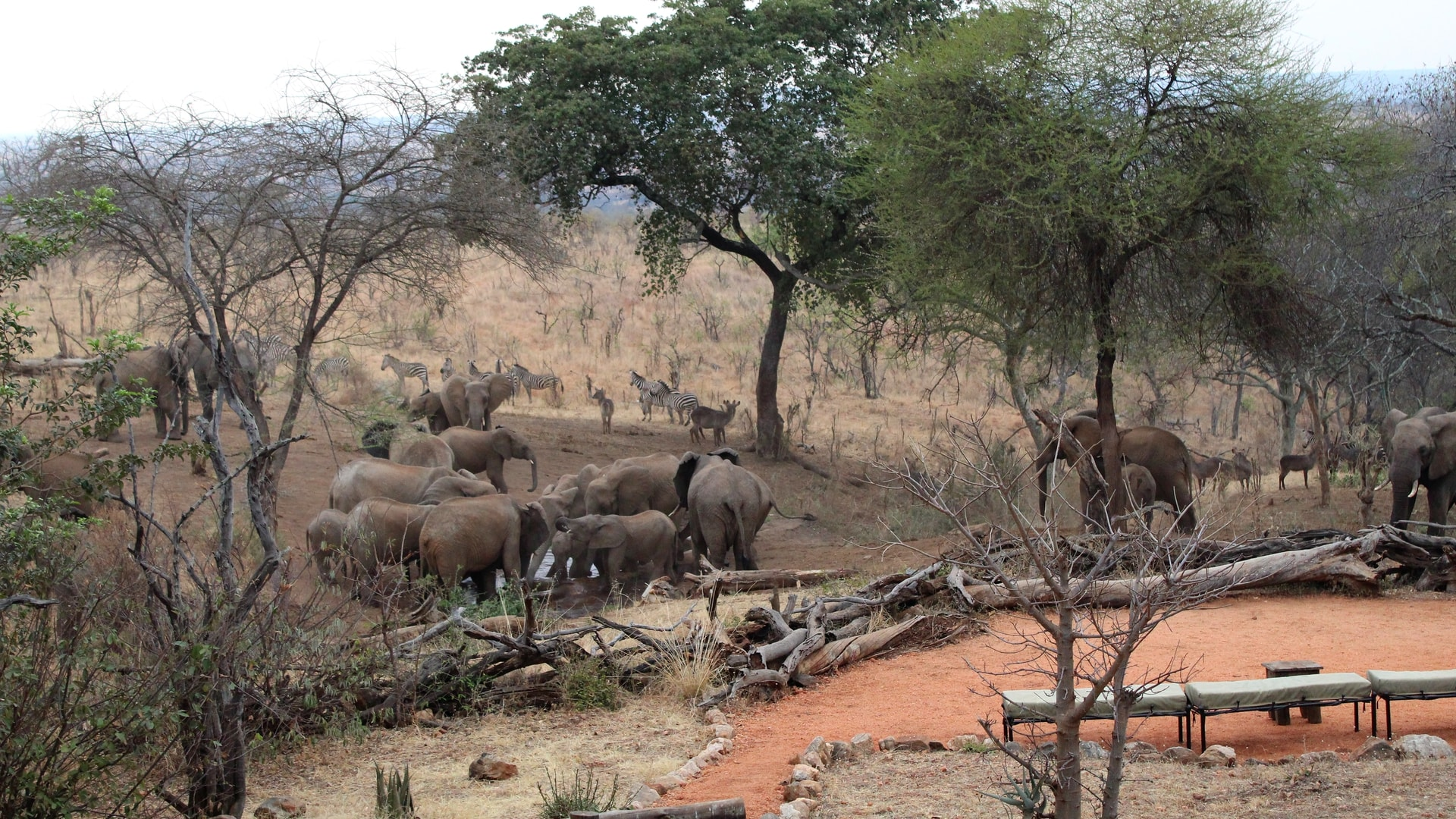 Elephants at the watering hole captured on the webcam at Tarangire Treetops, Elewana Collection webcam